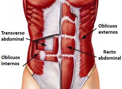 anatomiaabs